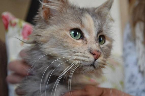 Δωρεάν διάθεση τροφών για γάτες από τον Δήμο Περάματος