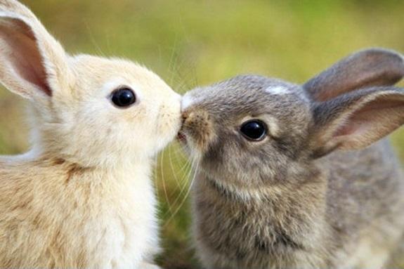Για ΤΑ ΖΩΑ: Τα µάτια ενός ζώου έχουν την ικανότητα να µιλούν µια σπουδαία γλώσσα. (Martin Buber, 1878-1965, Αυστροεβραίος φιλόσοφος)