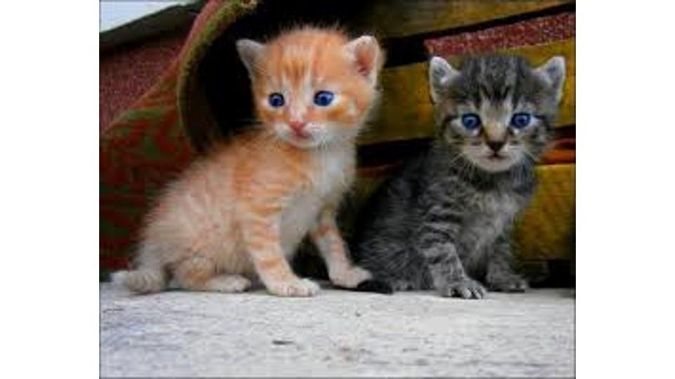 Τι γίνεται όταν βρίσκουµε και θέλουμε να βοηθήσουμε ορφάνα νεογέννητα γατάκια