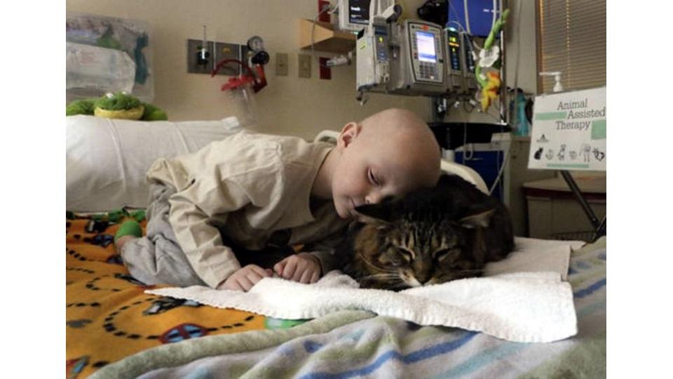 Καταπληκτικοί σκύλοι και γάτες βοηθούν παιδία σε νοσοκομεία  να γίνουν καλά.