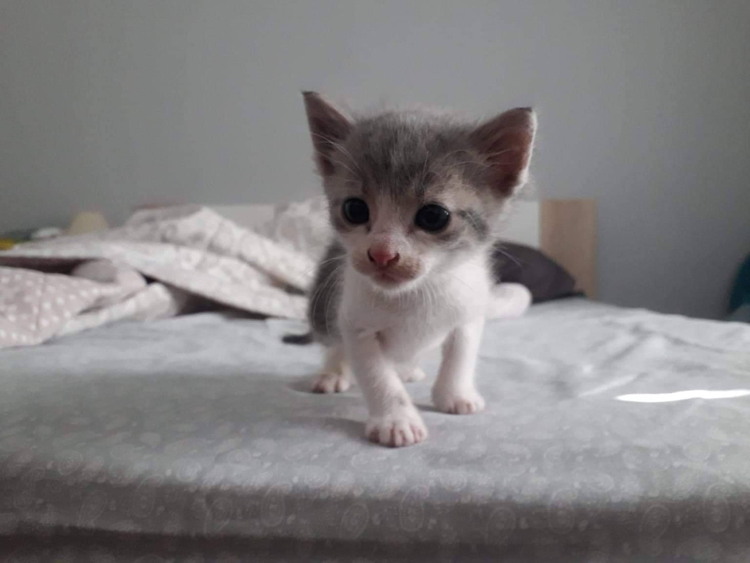 Πρόγραμμα φροντίδας αδέσποτων γατών του Δήμου Περάματος