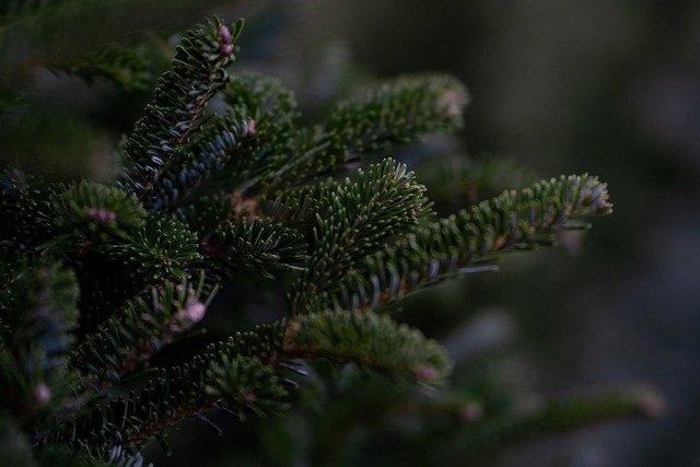 Δήμος Παπάγου – Χολαργού : Ανακύκλωση χριστουγεννιάτικων δέντρων