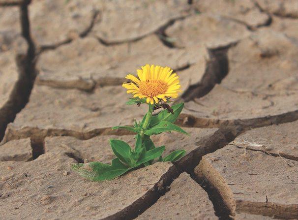 «Όσο υπάρχει ζωή, υπάρχει ελπίδα!», γράφει ο Θανάσης Καμπισιούλης