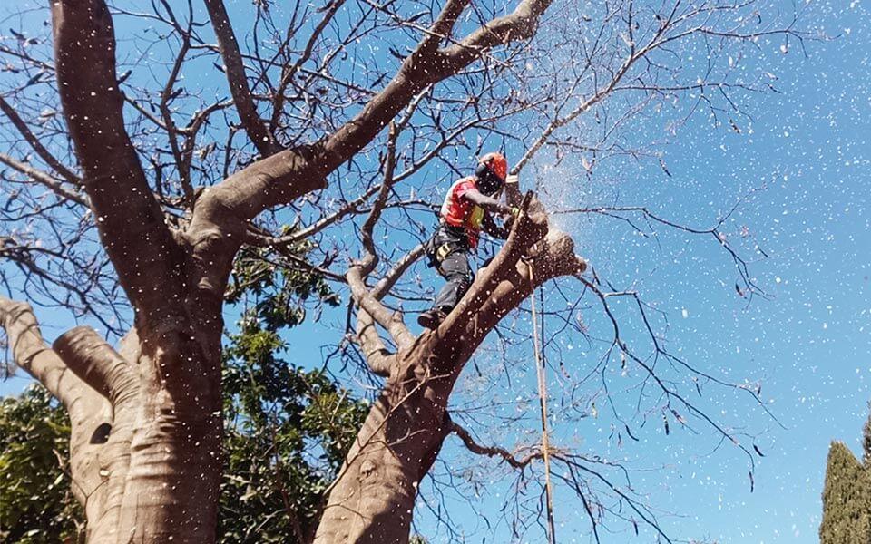 Ανακοίνωση του Δήμου Μαραθώνος σχετικά με την κοπή δένδρων