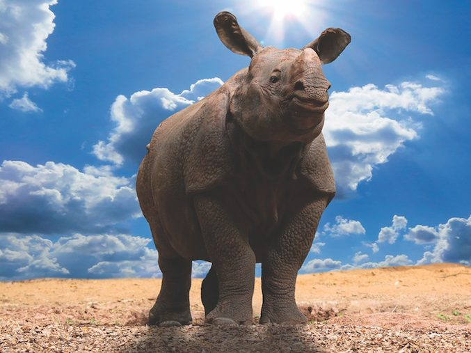 Αυτό που κρύβει ένας ρινόκερος, γράφει ο Θανάσης Καμπισιούλης