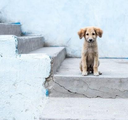 Μήνας ευαισθητοποίησης για τα αδέσποτα και δεσποζόμενα ζώα, ο Οκτώβριος για τον Δήμο Ελευσίνας.